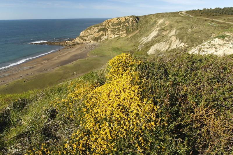Kostalde atlantikoko txilardia zaintzeko proiektua azalduko dute gaur Algortan