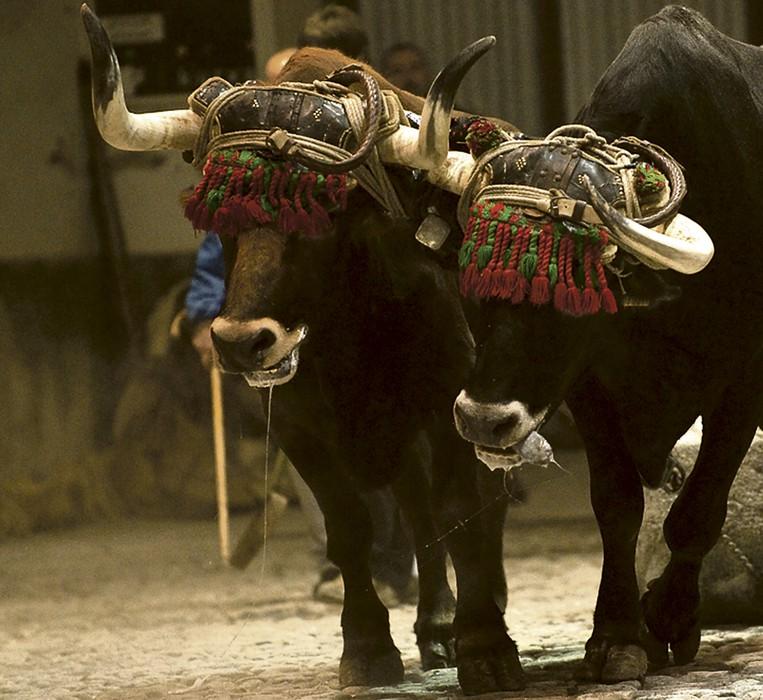 Protesta animalista deitu du biharko Esnatu Leioak