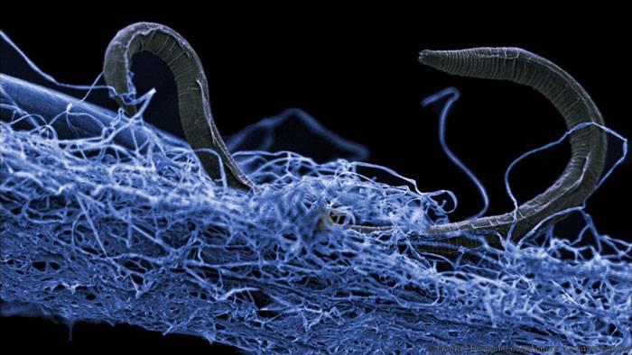 Bakteriofilia: bakterioak maitatuko ditugun aroa